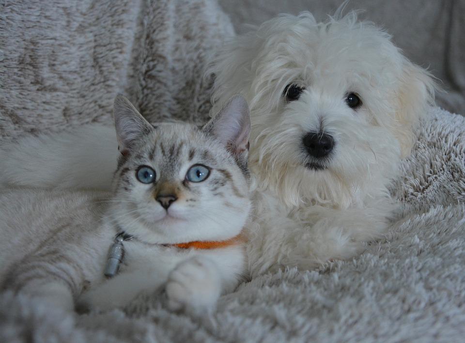 Les animaux domestiques, est-il important d'en avoir?