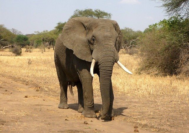 Quelles sont ces espèces animales en voies de disparition ?